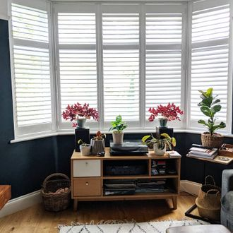 white shutters on windows in blue painted living room