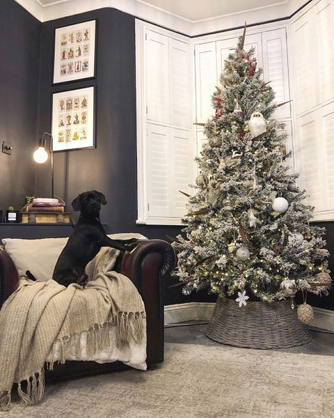 livingroom shot leather armchari in the corner with black dog, christmas tree in front of white shutters in a bay window