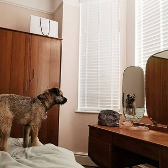 White wooden blinds dressed on the windows of bed room. Dog is standing on the bed in front of dressing table