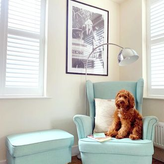 White shutters with brown dog sat on baby blue arm chair