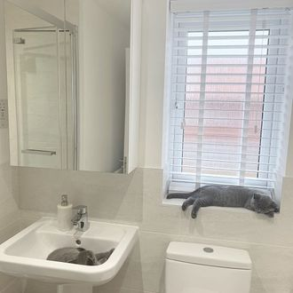 White Wooden blind in bathroom with 2 sleeping cats