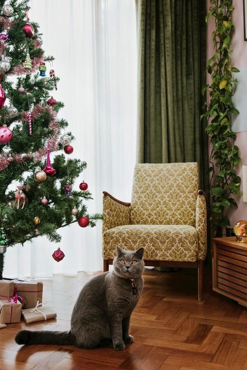 Luxe green curtains and soft white voiles layered in a window behind a retro chair, bright Christmas tree and grey cat